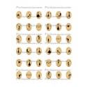 Collage digital Chat Oval 10 par 14mm